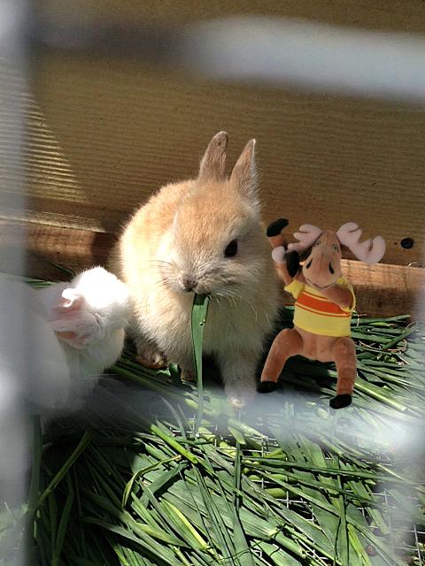 bunny 3 copy