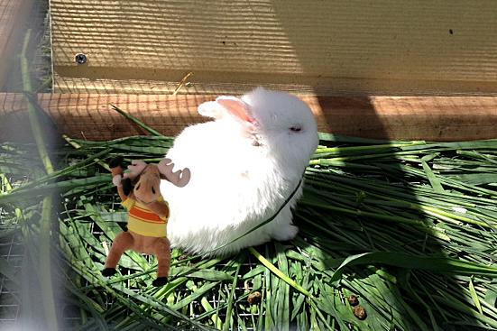 bunny 4 copy