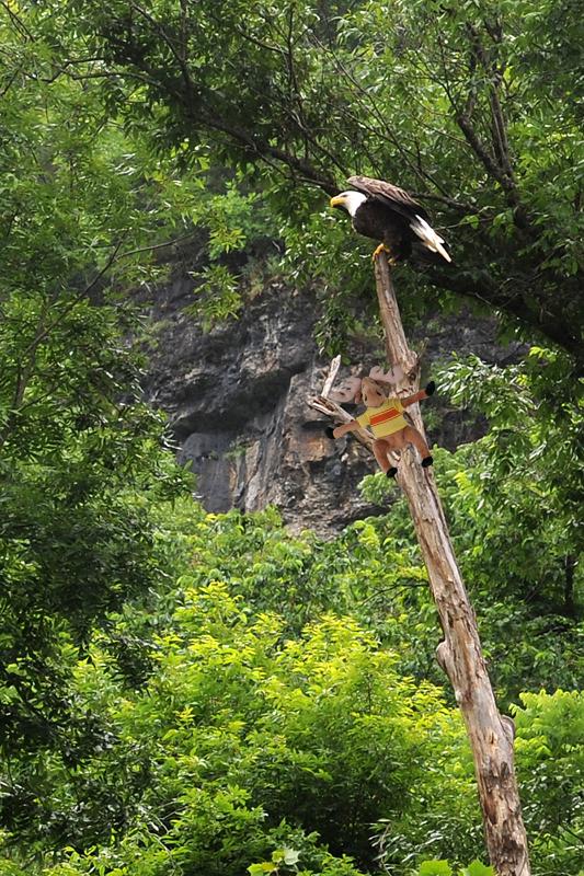 moose eagle